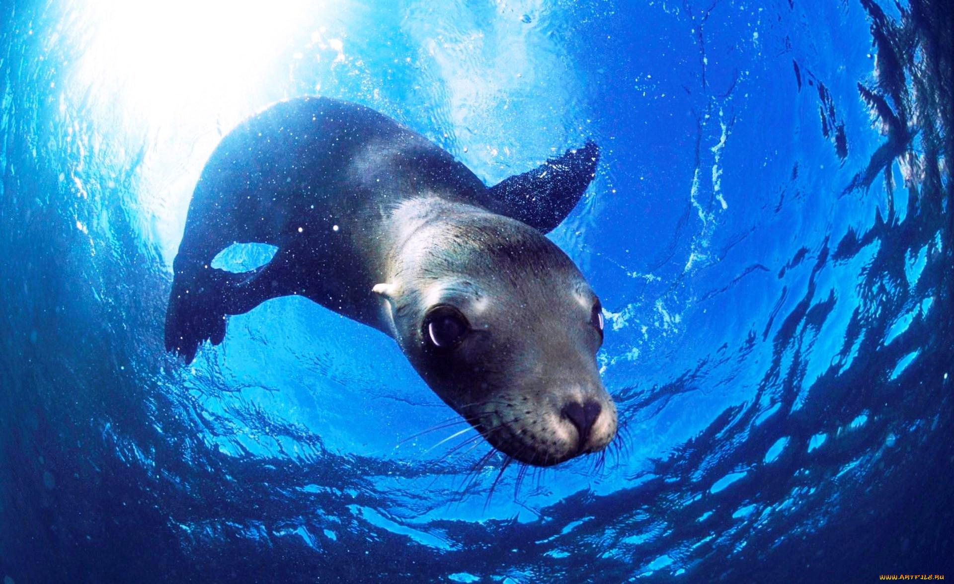 Водные животные фото и названия